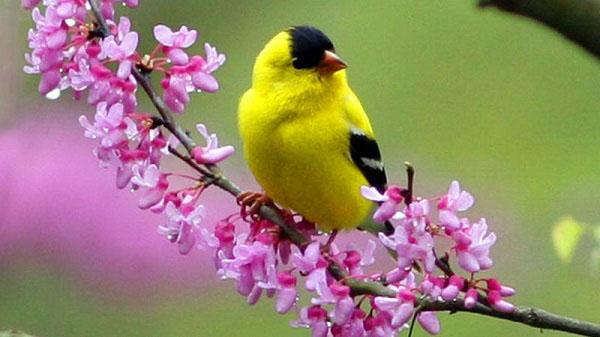 phan tich bai tho mua xuan nho nho - Phân tích bài thơ Mùa xuân nho nhỏ của Thanh Hải
