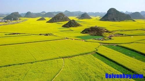 Tả cánh đồng lúa quê em vào một buổi sáng đẹp trời