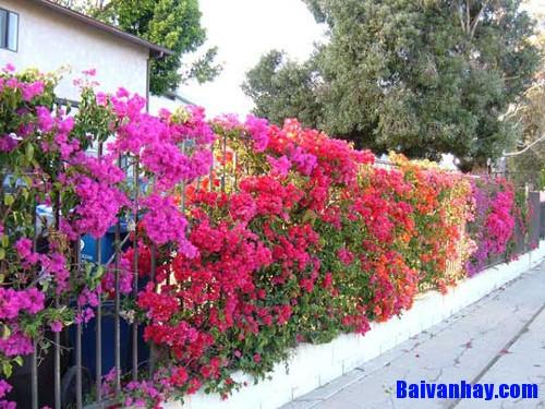 Tả một loài hoa đẹp nhưng không có hương thơm