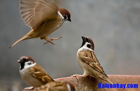 Tả một loài chim mà em thường thấy