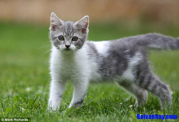 Hãy tả con mèo nhà em