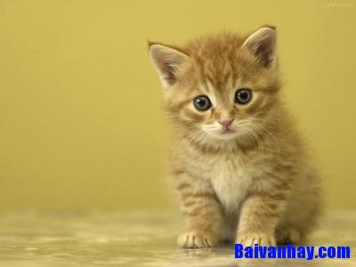 Tả con mèo nhà em hoặc con mèo em thường thấy