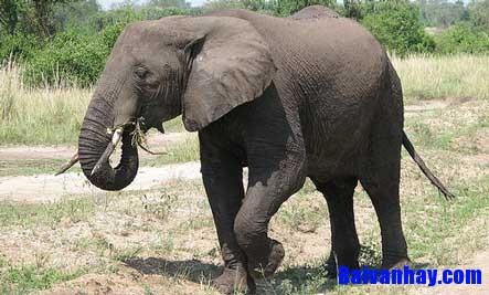van ta con voi - Tả con voi trong sở thú