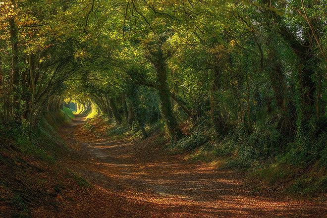 """dung di qua nhung loi mon - Suy nghĩa về câu nói """"Đừng đi theo lối mòn, hãy băng qua những nơi không có dấu chân người để tạo ra những con đường"""""""