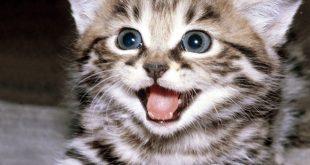 ta cay hoa hong ma em thich 310x165 - Tả con mèo lớp 4 hay nhất