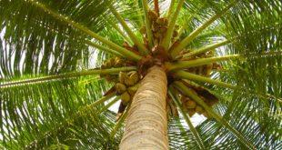 ta loai cay em yeu nhat 310x165 - Tả cây dừa lớp 5 mới nhất