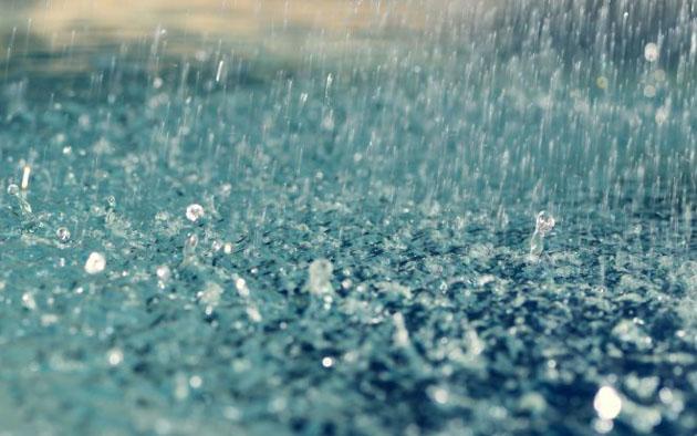 ta con meo lop 4 hay nhat - Tả cơn mưa lớp 5 hay nhất