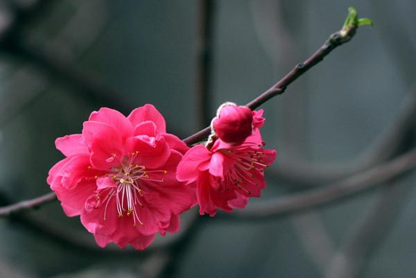 unnamed file 25 - Cảm nghĩ về mùa xuân trên quê hương em