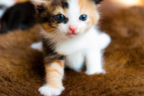 unnamed file 8 - Tả con mèo tam thể mà em biết