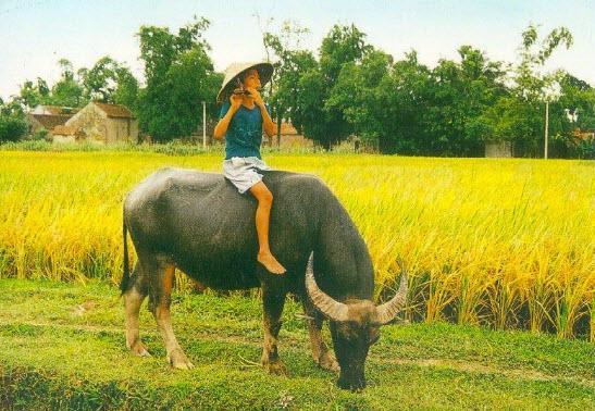 unnamed file 9 - Tả con trâu ở làng quê Việt Nam